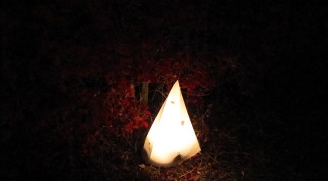 【紅葉】河口湖紅葉のトンネル【河口湖もみじ回廊】